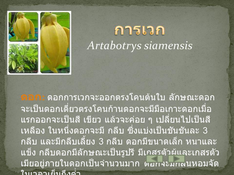 ต้น : การเวกเป็นไม้เถา เลื้อยเนื้อแข็งที่มีขนาดใหญ่ จะมีมือเกาะรูปตะขอยื่น ออกมา จากเถาเถาบริเวณ ยอดอ่อนจะเป็นสีเขียว เมื่อ เถาแก่ก็จะเป็นสีน้ำตาล