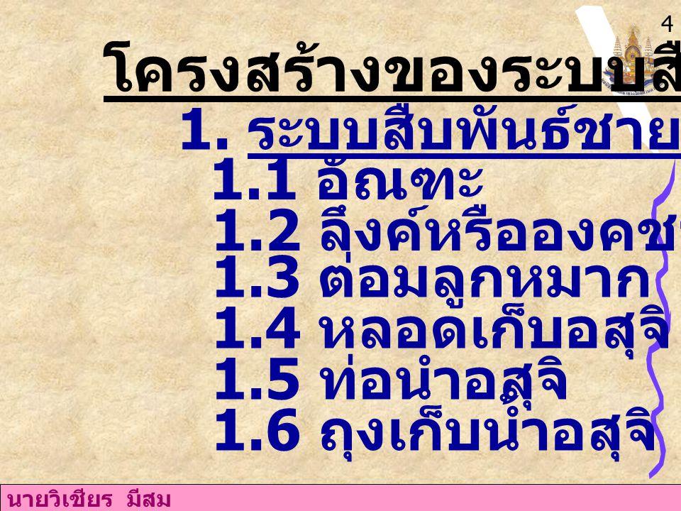 นายวิเชียร มีสม 12 4.ควรดื่มน้ำวันละ 6-8 แก้ว 5. ควรพักผ่อนอย่างเพียงพอ 6.