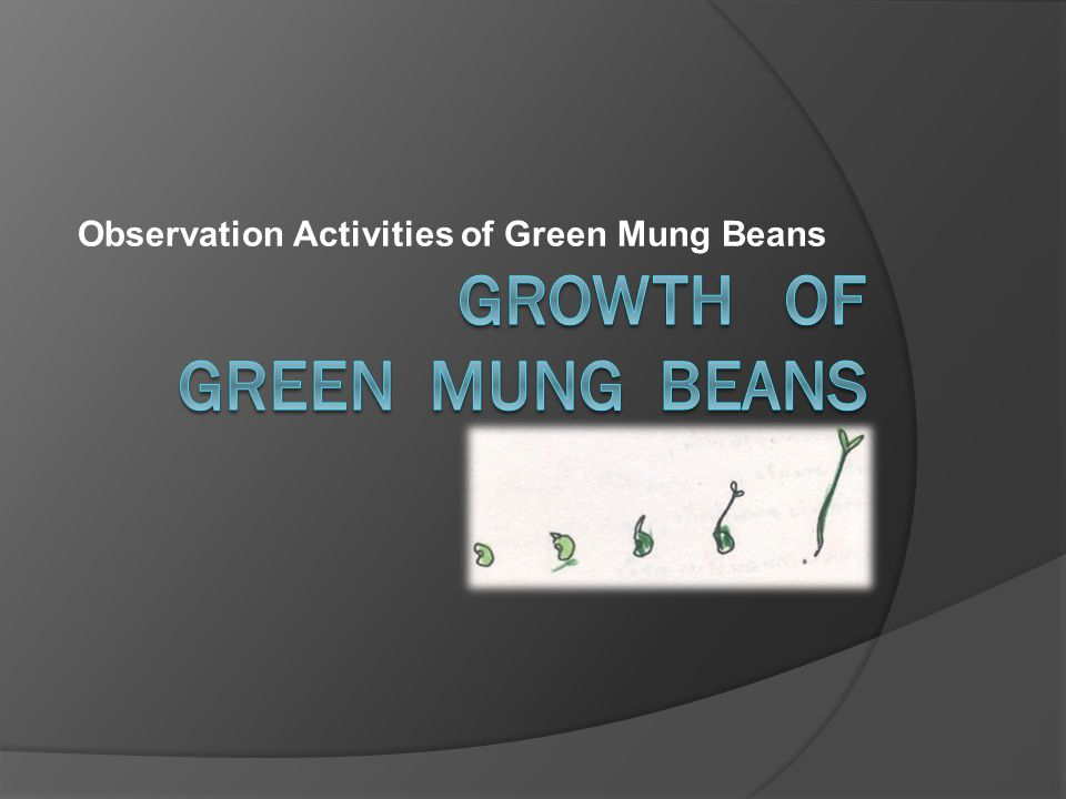 The scientific method of Growth of green mung beans 1.