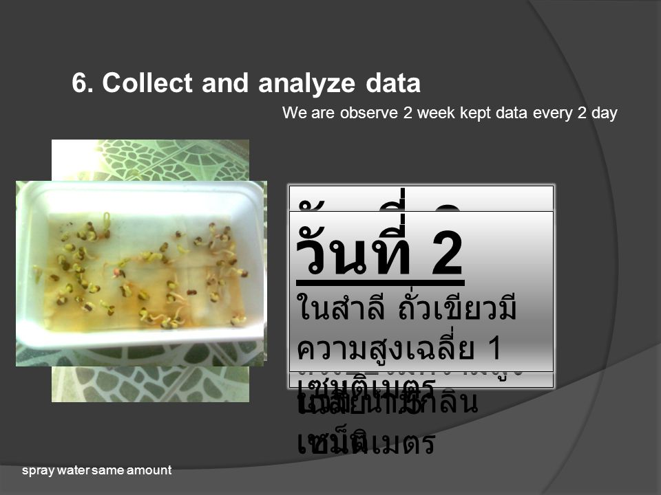 6. Collect and analyze data We are observe 2 week kept data every 2 day spray water same amount วันที่ 2 ในดินถั่วเขียวมี ความสูงเฉลี่ย 4 เซนติเมตร วั