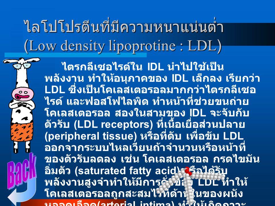 ไลโปโปรตีนที่มีความหนาแน่นปานกลาง (Intermediate density lipoprotine : IDL) เมื่อไตรกลีเซอไรด์ ใน VLDL และ ไคโลไมครอนนำไปใช้เป็นพลังงานแล้ว อนุภาคของ V