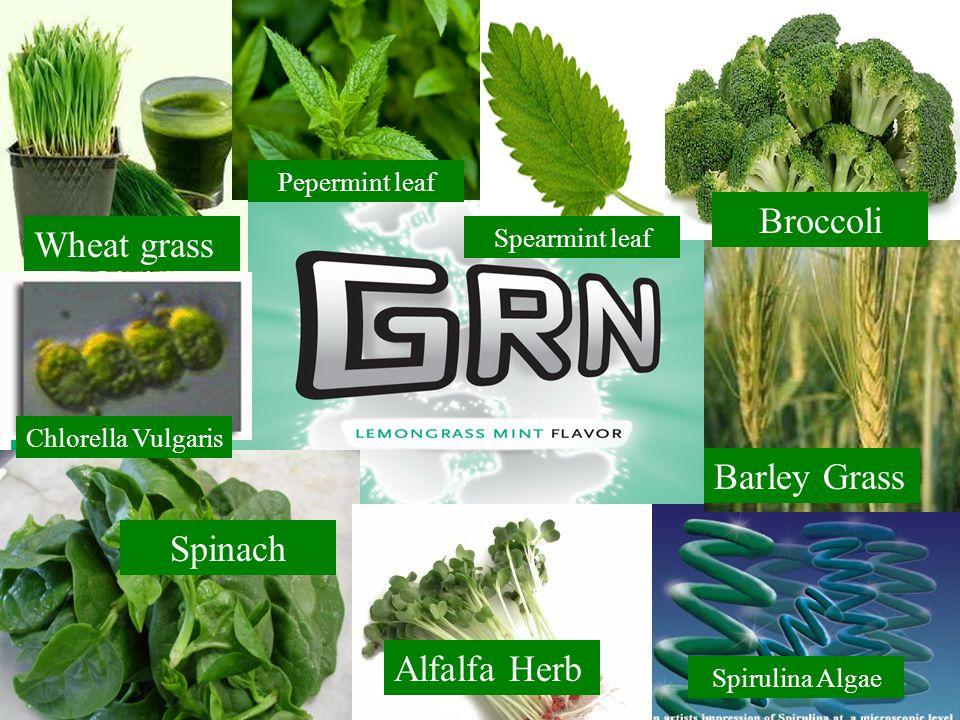 Wheat grass Spinach Alfalfa Herb Chlorella Vulgaris Spirulina Algae Barley Grass Broccoli Pepermint leaf Spearmint leaf