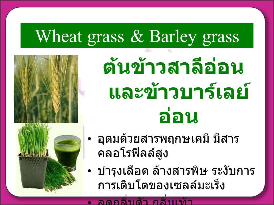Wheat grass & Barley grass ต้นข้าวสาลีอ่อน และข้าวบาร์เลย์ อ่อน อุดมด้วยสารพฤกษเคมี มีสาร คลอโรฟิลล์สูง บำรุงเลือด ล้างสารพิษ ระงับการ การเติบโตของเซลล์มะเร็ง ลดกลิ่นตัว กลิ่นเท้า ช่วยควบคุมระดับน้ำตาล และ คลอเรสเตอรอล