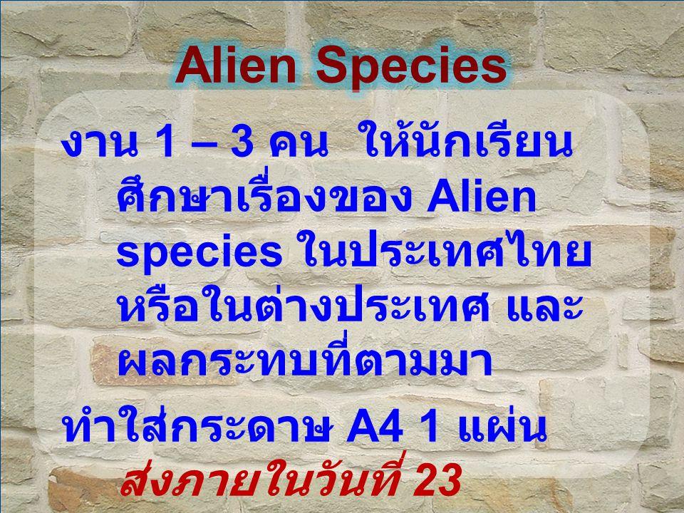 งาน 1 – 3 คน ให้นักเรียน ศึกษาเรื่องของ Alien species ในประเทศไทย หรือในต่างประเทศ และ ผลกระทบที่ตามมา ทำใส่กระดาษ A4 1 แผ่น ส่งภายในวันที่ 23 มกราคม