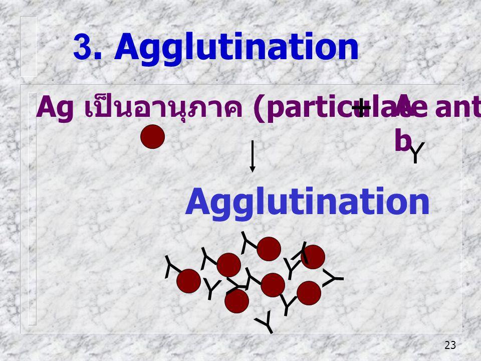 23 Ag เป็นอานุภาค (particulate antigen) 3. Agglutination Agglutination Y Y Y Y Y Y Y Y Y Y Y Y AbAb +