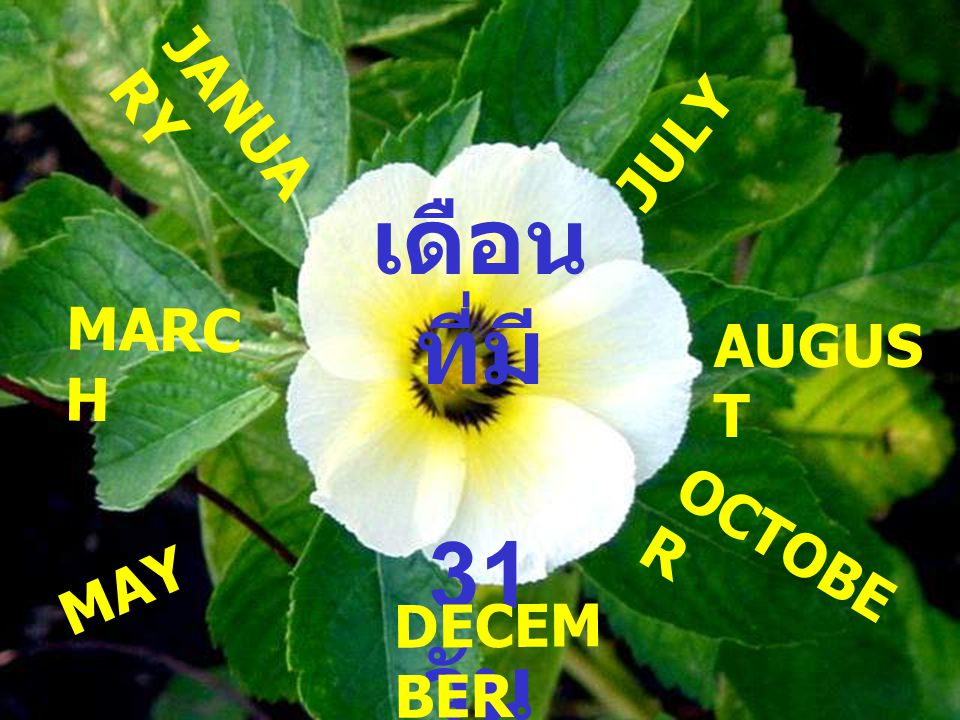 เดือน ที่มี 31 วัน JANUA RY MARC H MAY JULY AUGUS T OCTOBE R DECEM BER