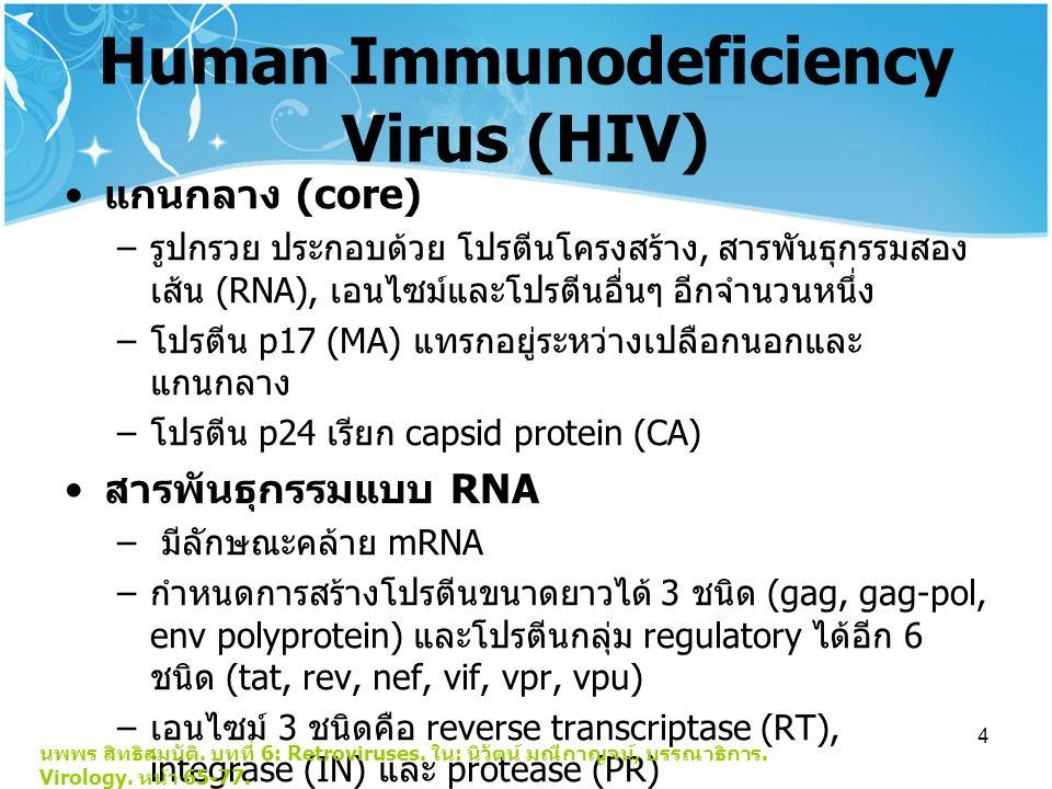 4 Human Immunodeficiency Virus (HIV) แกนกลาง (core) – รูปกรวย ประกอบด้วย โปรตีนโครงสร้าง, สารพันธุกรรมสอง เส้น (RNA), เอนไซม์และโปรตีนอื่นๆ อีกจำนวนหนึ่ง – โปรตีน p17 (MA) แทรกอยู่ระหว่างเปลือกนอกและ แกนกลาง – โปรตีน p24 เรียก capsid protein (CA) สารพันธุกรรมแบบ RNA – มีลักษณะคล้าย mRNA – กำหนดการสร้างโปรตีนขนาดยาวได้ 3 ชนิด (gag, gag-pol, env polyprotein) และโปรตีนกลุ่ม regulatory ได้อีก 6 ชนิด (tat, rev, nef, vif, vpr, vpu) – เอนไซม์ 3 ชนิดคือ reverse transcriptase (RT), integrase (IN) และ protease (PR) นพพร สิทธิสมบัติ.