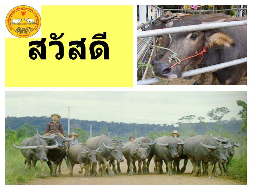 2. ตรวจสอบและยืนยันข้อมูลเกษตรกร ผู้เลี้ยงสัตว์ ตามแบบ ฐปศ. ๑๐ มาที่ กลุ่มยุทธศาสตร์ และสารสนเทศ การพัฒนาปศุสัตว์ สำนักงานปศุสัตว์ จังหวัดนครพนม ทาง E
