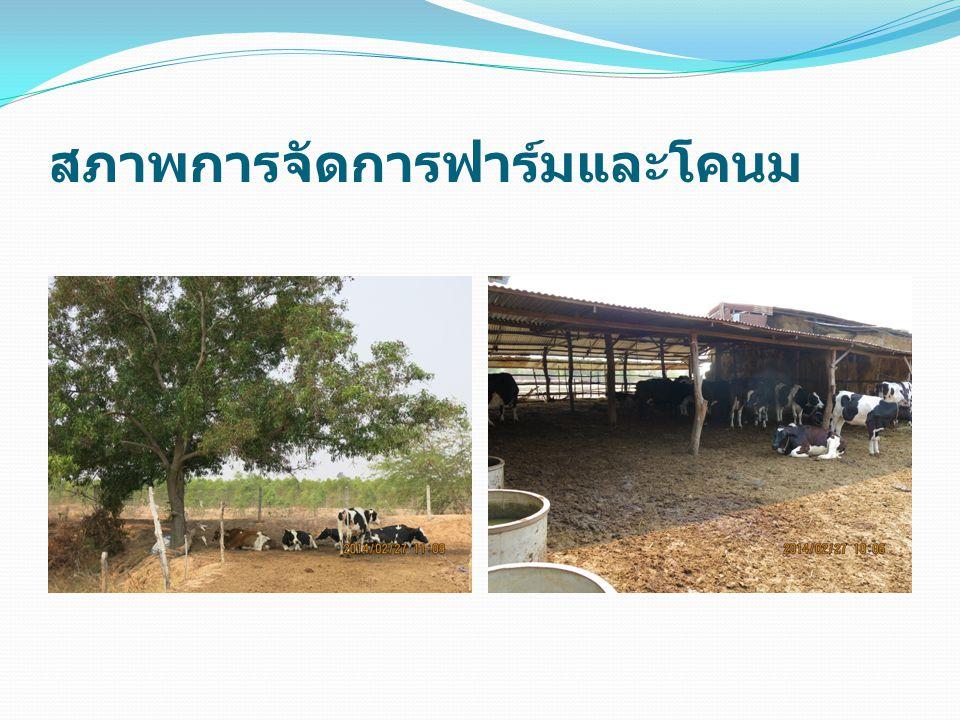 สภาพการจัดการฟาร์มและโคนม