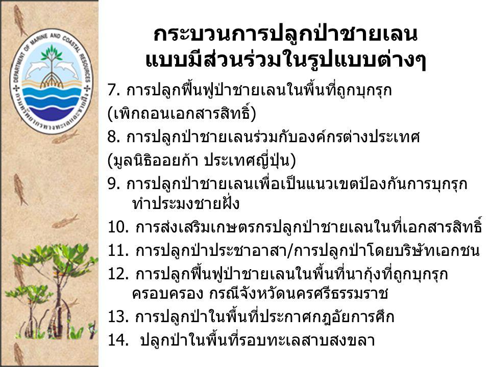 กระบวนการปลูกป่าชายเลน แบบมีส่วนร่วมในรูปแบบต่างๆ 7.
