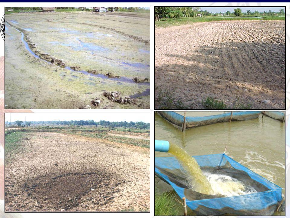 การเตียมบ่อปลา บ่อ ใหม่ บ่อ เก่า ปล่อยน้ำเก่า ออก ลอก - ปรับพื้น บ่อ ตากบ่อ โรยปูนขาว เติมน้ำ - เบื่อปลา ทําสีน้ำ  2, 3, 4