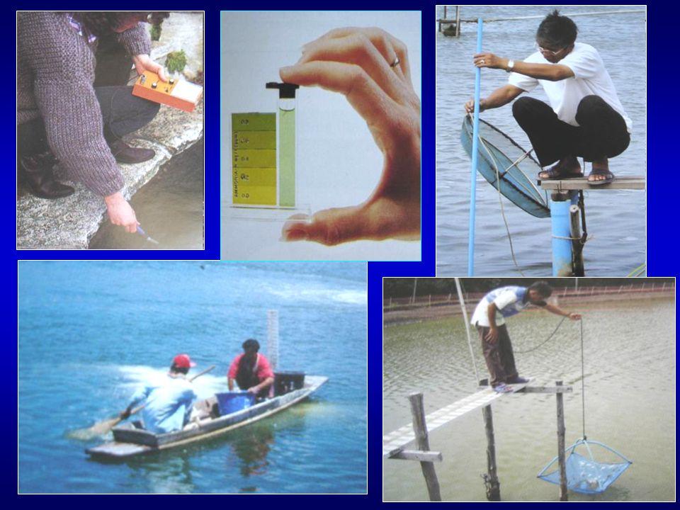 แบคทีเรีย ยีสต์ ราฯ สายพันธุ์ไทย - ราชการ รับรอง แก้ปัญหาน้ำเน่าเสีย เจริญเติบโตดีขึ้น / เพิ่ม ความแข็งแรง จุลินทรีย์ใช้ใน สัตว์น้ำ