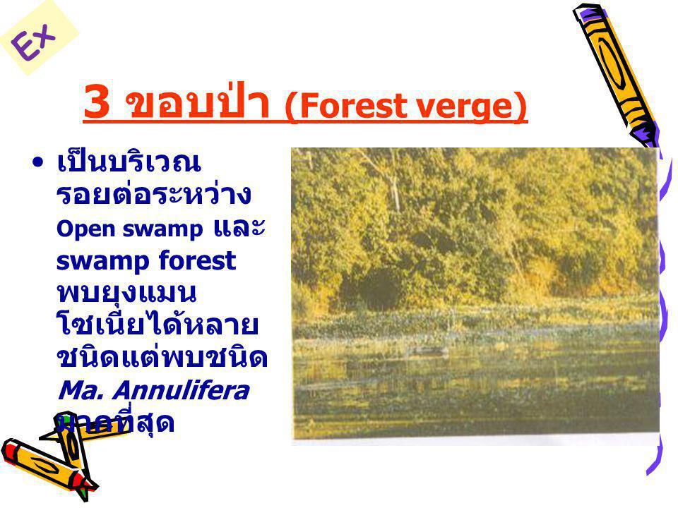 3 ขอบป่า (Forest verge) เป็นบริเวณ รอยต่อระหว่าง Open swamp และ swamp forest พบยุงแมน โซเนียได้หลาย ชนิดแต่พบชนิด Ma. Annulifera มากที่สุด Ex