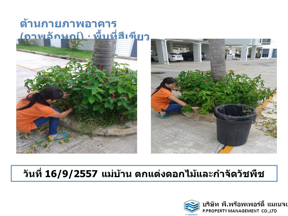 ด้านกายภาพอาคาร ( ภาพลักษณ์ ) : พื้นที่สีเขียว วันที่ 16/9/2557 แม่บ้าน ตกแต่งดอกไม้และกำจัดวัชพืช บริษัท พี.