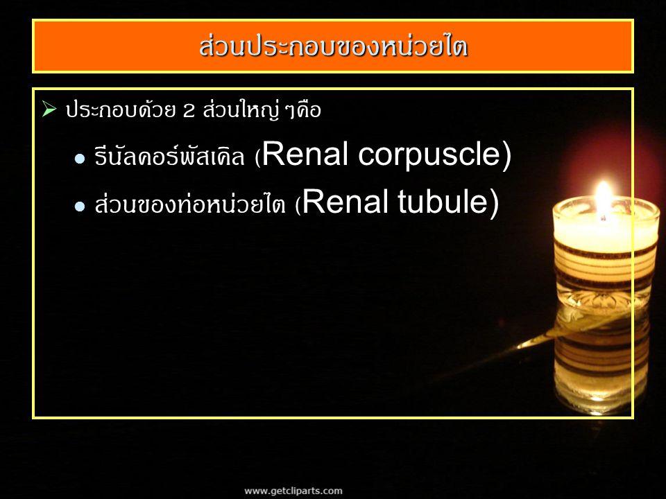 ส่วนประกอบของหน่วยไต  ประกอบด้วย 2 ส่วนใหญ่ๆคือ รีนัลคอร์พัสเคิล (Renal corpuscle) รีนัลคอร์พัสเคิล (Renal corpuscle) ส่วนของท่อหน่วยไต (Renal tubule) ส่วนของท่อหน่วยไต (Renal tubule)