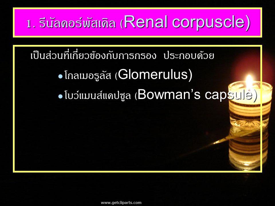1. รีนัลคอร์พัสเคิล (Renal corpuscle) เป็นส่วนที่เกี่ยวข้องกับการกรอง ประกอบด้วย โกลเมอรูลัส (Glomerulus) โกลเมอรูลัส (Glomerulus) โบว์แมนส์แคปซูล (Bo