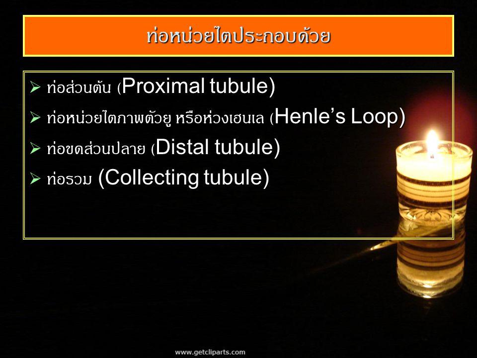 ท่อหน่วยไตประกอบด้วย  ท่อส่วนต้น (Proximal tubule)  ท่อหน่วยไตภาพตัวยู หรือห่วงเฮนเล (Henle's Loop)  ท่อขดส่วนปลาย (Distal tubule)  ท่อรวม (Collecting tubule)