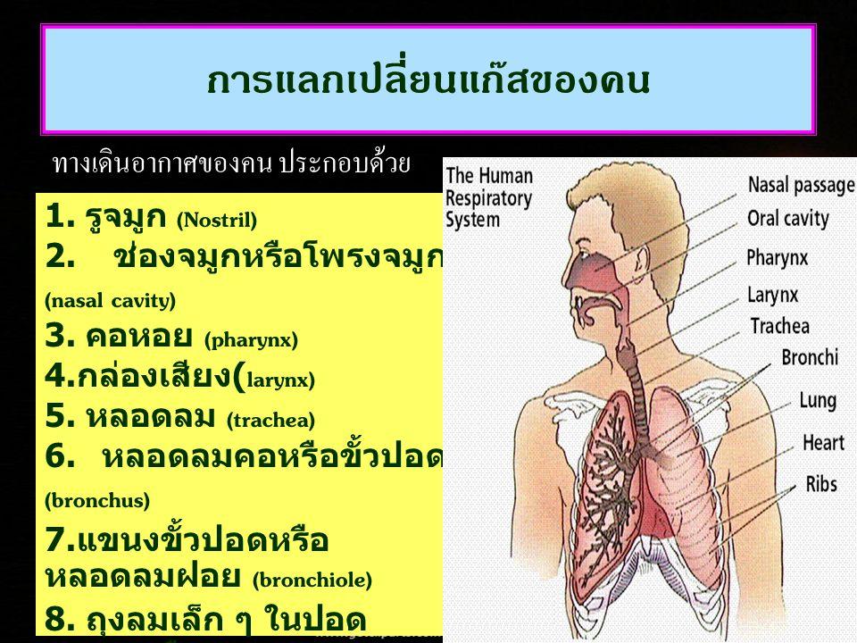 การแลกเปลี่ยนแก๊สของคน ทางเดินอากาศของคน ประกอบด้วย 1. รูจมูก (Nostril) 2. ช่องจมูกหรือโพรงจมูก (nasal cavity) 3. คอหอย (pharynx) 4. กล่องเสียง (laryn