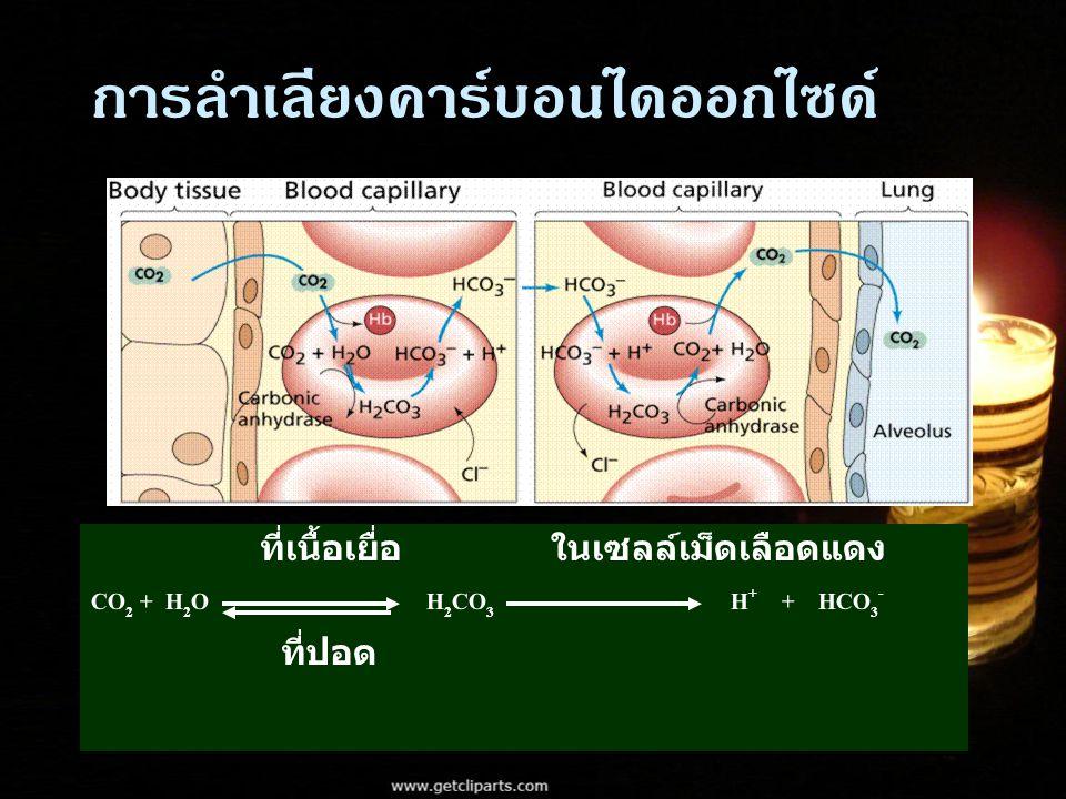 การลำเลียงคาร์บอนไดออกไซด์ ที่เนื้อเยื่อ ในเซลล์เม็ดเลือดแดง CO 2 + H 2 O H 2 CO 3 H + + HCO 3 - ที่ปอด