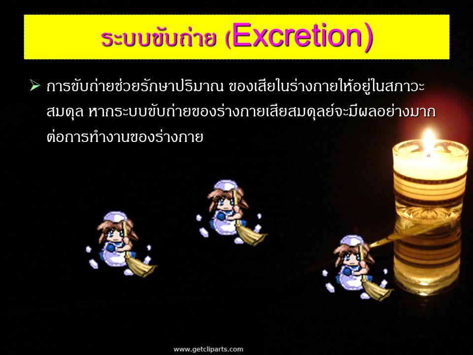 ระบบขับถ่าย (Excretion)  การขับถ่ายช่วยรักษาปริมาณ ของเสียในร่างกายให้อยู่ในสภาวะ สมดุล หากระบบขับถ่ายของร่างกายเสียสมดุลย์จะมีผลอย่างมาก ต่อการทำงานของร่างกาย