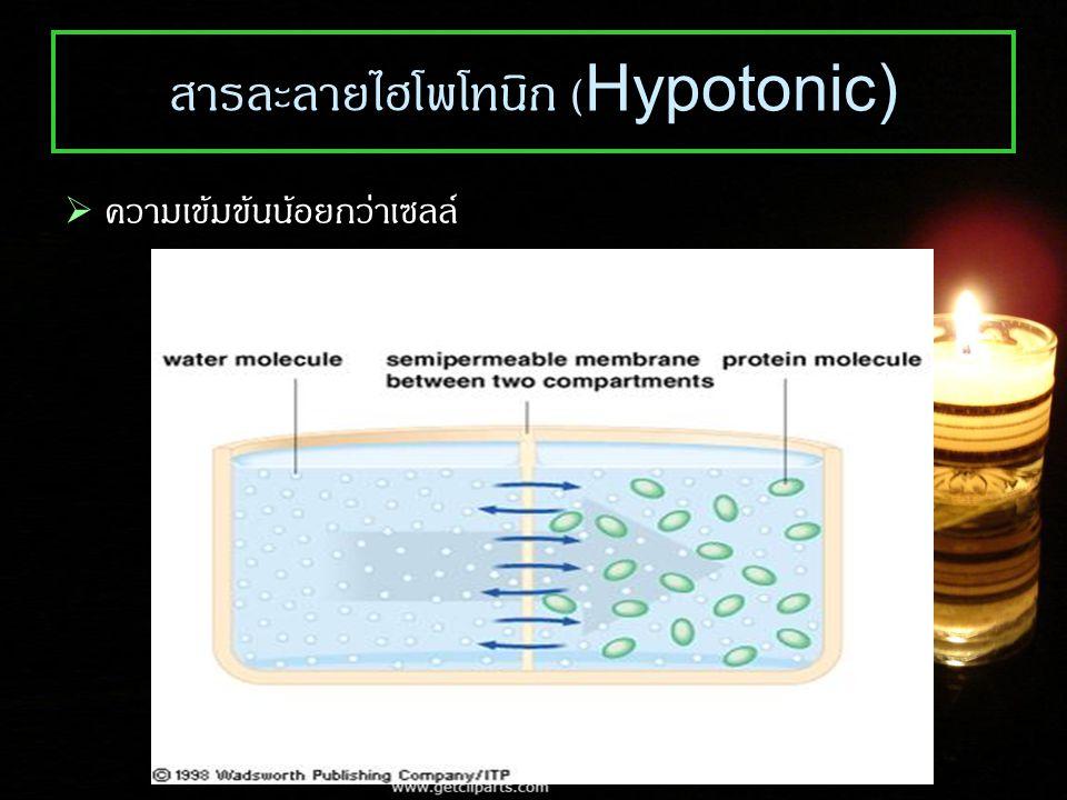 สารละลายไฮโพโทนิก (Hypotonic)  ความเข้มข้นน้อยกว่าเซลล์