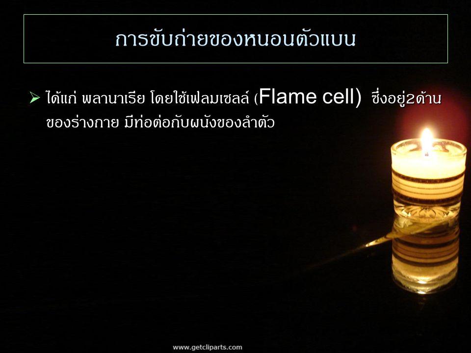 การขับถ่ายของหนอนตัวแบน  ได้แก่ พลานาเรีย โดยใช้เฟลมเซลล์ (Flame cell) ซึ่งอยู่ 2 ด้าน ของร่างกาย มีท่อต่อกับผนังของลำตัว