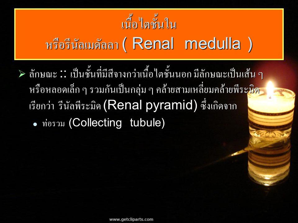 เนื้อไตชั้นใน หรือรีนัลเมดัลลา ( Renal medulla )  ลักษณะ :: เป็นชั้นที่มีสีจางกว่าเนื้อไตชั้นนอก มีลักษณะเป็นเส้น ๆ หรือหลอดเล็ก ๆ รวมกันเป็นกลุ่ม ๆ คล้ายสามเหลี่ยมคล้ายพีระมิด เรียกว่า รีนัลพีระมิด (Renal pyramid) ซึ่งเกิดจาก ท่อรวม (Collecting tubule) ท่อรวม (Collecting tubule)