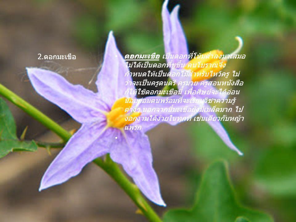 หญ้าแพรก เป็นหญ้าที่เจริญงอกงาม แพร่กระจายพันธ์ ไปได้อย่างรวดเร็วมาก หญ้าแพรกดอกมะเขือจึงมีความหมาย ซ่อนเร้นอยู่ คนโบราณจึงถือเอาเป็นเคล็ด ว่า ถ้าใช้หญ้าแพรกดอกมะเขือไหว้ครู แล้ว สติปัญญาของเด็กจะเจริญงอกงาม เหมือนหญ้าแพรกและ ดอกมะเขือนั่นเอง หญ้าแพรก 3.