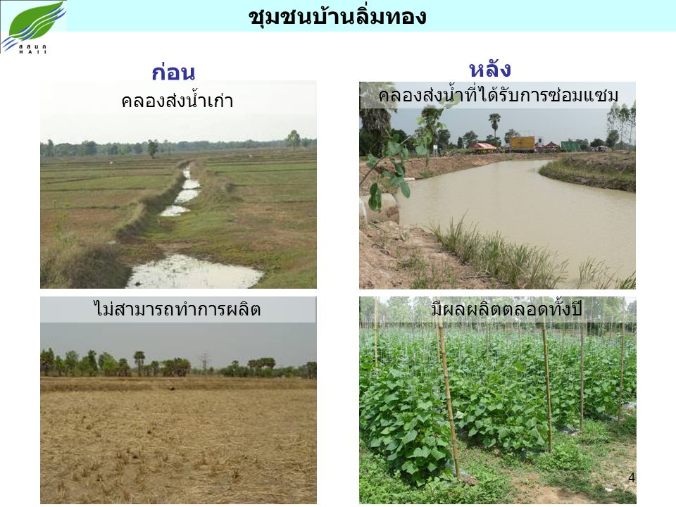 ชุมชนบ้านลิ่มทอง ก่อน หลัง คลองส่งน้ำเก่า ไม่สามารถทำการผลิต คลองส่งน้ำที่ได้รับการซ่อมแซม มีผลผลิตตลอดทั้งปี 4