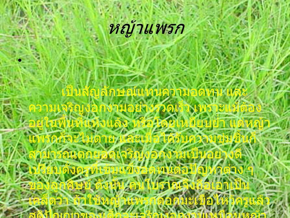 หญ้าแพรก เป็นสัญลักษณ์แทนความอดทน และ ความเจริญงอกงามอย่างรวดเร็ว เพราะแม้ต้อง อยู่ในพื้นที่แห้งแล้ง หรือโดยเหยียบย่ำ แต่หญ้า แพรกก็จะไม่ตาย และเมื่อได้รับความชุ่มชื้นก็ สามารถแตกยอดเจริญงอกงามเป็นอย่างดี เปรียบดั่งครูืที่เข้มแข็งอดทนต่อปัญหาต่าง ๆ ของลูกศิษย์ ดังนั้น คนโบราณจึงถือเอาเป็น เคล็ดว่า ถ้าใช้หญ้าแพรกดอกมะเขือไหว้ครูแล้ว สติปัญญาของเด็กจะเจริญงอกงามเหมือนหญ้า แพรกและ ดอกมะเขือนั่นเอง