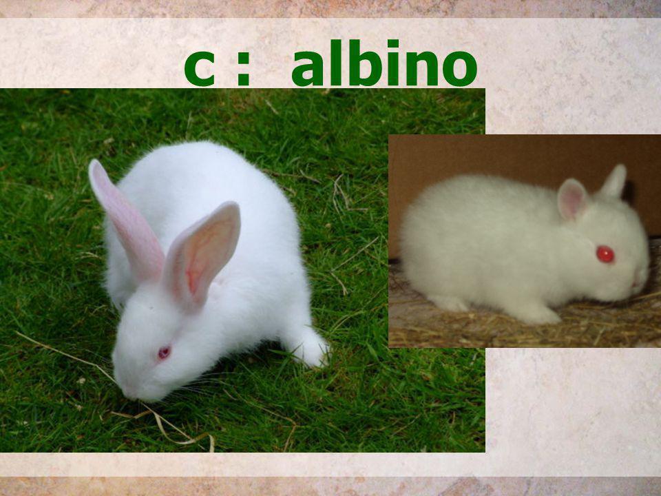 c : albino