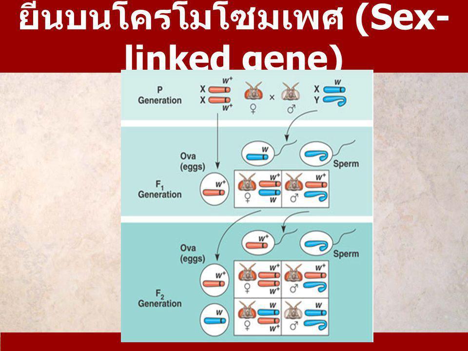 ยีนบนโครโมโซมเพศ (Sex- linked gene)