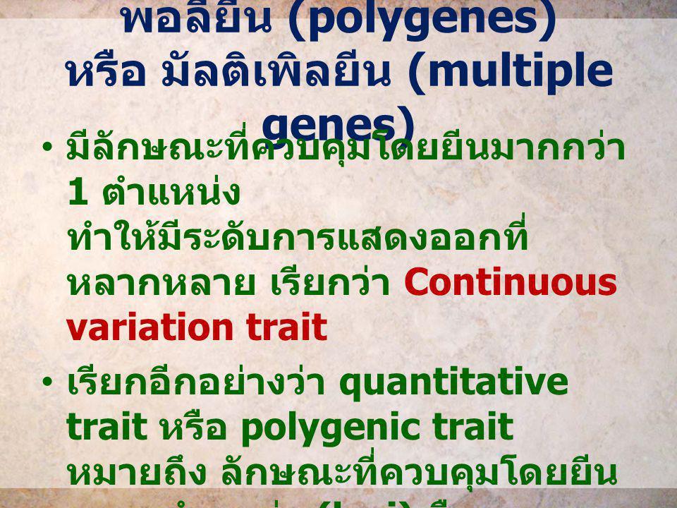 พอลียีน (polygenes) หรือ มัลติเพิลยีน (multiple genes) มีลักษณะที่ควบคุมโดยยีนมากกว่า 1 ตำแหน่ง ทำให้มีระดับการแสดงออกที่ หลากหลาย เรียกว่า Continuous
