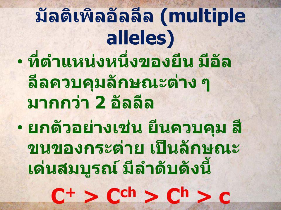 มัลติเพิลอัลลีล (multiple alleles) ที่ตำแหน่งหนึ่งของยีน มีอัล ลีลควบคุมลักษณะต่าง ๆ มากกว่า 2 อัลลีล ยกตัวอย่างเช่น ยีนควบคุม สี ขนของกระต่าย เป็นลัก