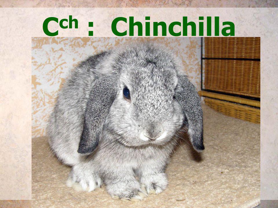 C ch : Chinchilla