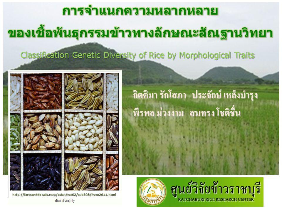 สรุปผลการทดลอง สำหรับลักษณะทางการเกษตร สำหรับลักษณะทางการเกษตร สามารถแบ่งกลุ่มพันธุ์ข้าวได้ 9 กลุ่มหลักโดย กลุ่มที่ 3 มีจำนวนสมาชิกภายในกลุ่มสูงสุด จำนวน 126 พันธุ์ สำหรับลักษณะทางการเกษตร กลุ่มพันธุ์ข้าวที่มีค่าเฉลี่ยสูงสุดของลักษณะ เส้นผ่าศูนย์กลางลำต้น ความยาวลำต้นจำนวนรวงต่อกอ น้ำหนัก 100 เมล็ด ความยาวเมล็ดข้าวเปลือก และความกว้างเมล็ดข้าวเปลือก ได้แก่ กลุ่มพันธุ์ ข้าวที่ 8 3 17 8 8 และ 15 ตามลำดับ การจัดกลุ่มพันธุ์ข้าวนั้นสามารถใช้เป็น ข้อมูลพื้นฐานในการจำแนกพันธุ์ข้าว เพื่อคัดเลือกพ่อแม่พันธุ์และวางแผนการ ปรับปรุงพันธุ์ได้รวดเร็วขึ้น ลดการซ้ำซ้อนของพันธุ์ข้าว และจัดการเชื้อ พันธุกรรมข้าวให้เป็นระบบ