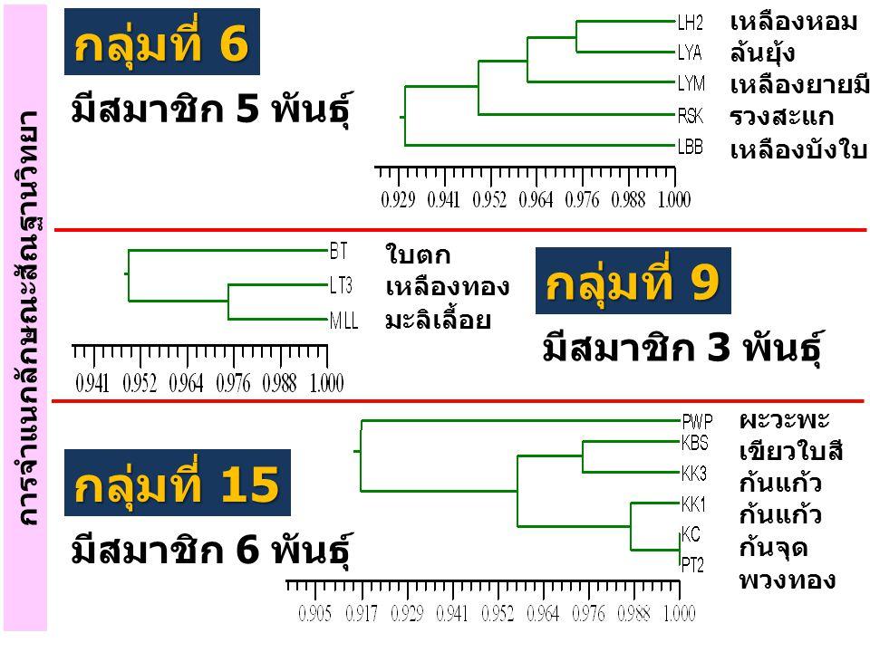การจำแนกลักษณะสัณฐานวิทยา กลุ่มที่ 6 มีสมาชิก 5 พันธุ์ เหลืองหอม ล้นยุ้ง เหลืองยายมี รวงสะแก เหลืองบังใบ ใบตก เหลืองทอง มะลิเลี้อย ผะวะพะ เขียวใบสี ก้
