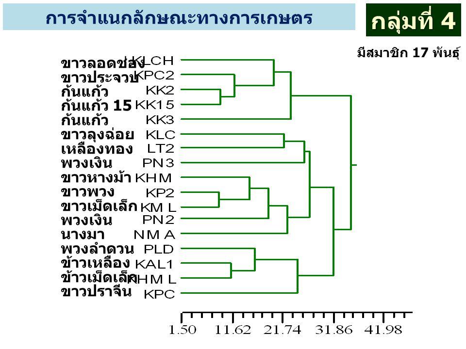 การจำแนกลักษณะทางการเกษตร กลุ่มที่ 4 มีสมาชิก 17 พันธุ์ ขาวลอดช่อง ขาวประจวบ ก้นแก้ว ก้นแก้ว 15 ก้นแก้ว ขาวลุงฉ่อย เหลืองทอง พวงเงิน ขาวหางม้า ขาวพวง