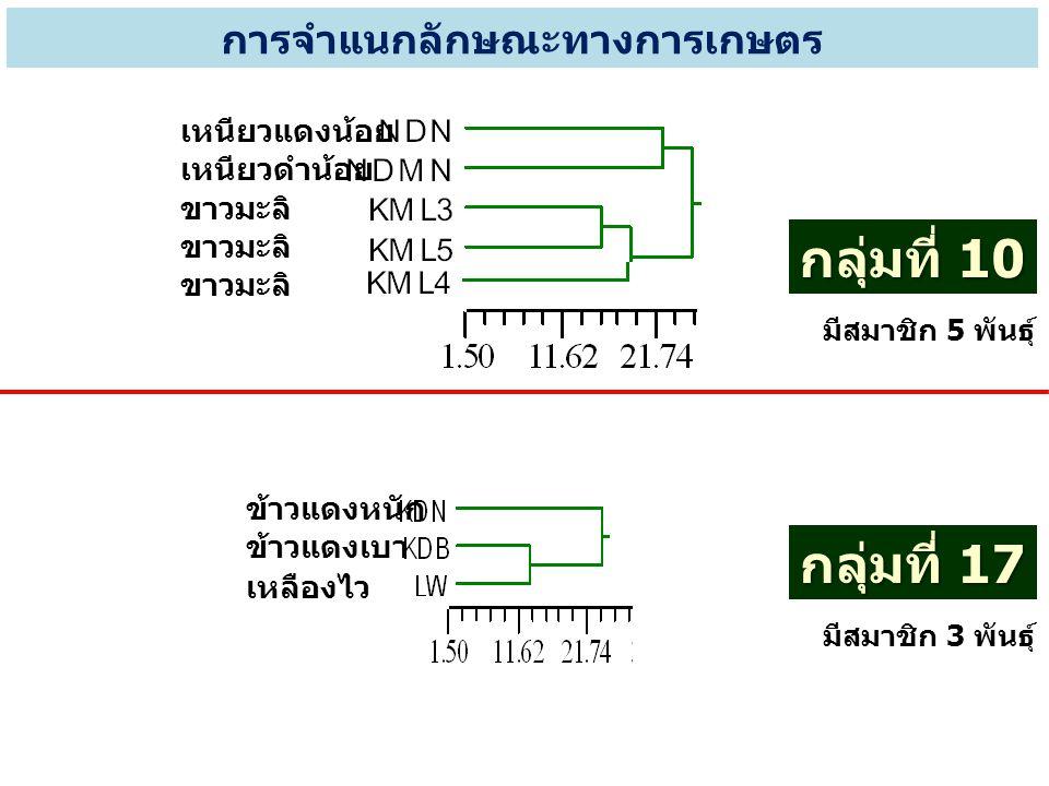 เหนียวแดงน้อย เหนียวดำน้อย ขาวมะลิ การจำแนกลักษณะทางการเกษตร กลุ่มที่ 10 มีสมาชิก 5 พันธุ์ กลุ่มที่ 17 มีสมาชิก 3 พันธุ์ ข้าวแดงหนัก ข้าวแดงเบา เหลือง