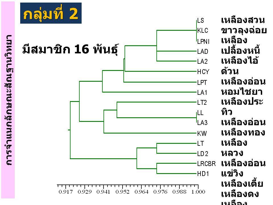 การจำแนกลักษณะสัณฐานวิทยา กลุ่มที่ 3 เหลืองบิด เหลือง หอม พวงหาง หมู ข้าว เหลือง เหลือง เพชร พวง ลำดวน สาวลืม วาง ขาว ประจวบ พญาชม ขาวหลวง เหลือง เต่า มีสมาชิก 12 พันธุ์