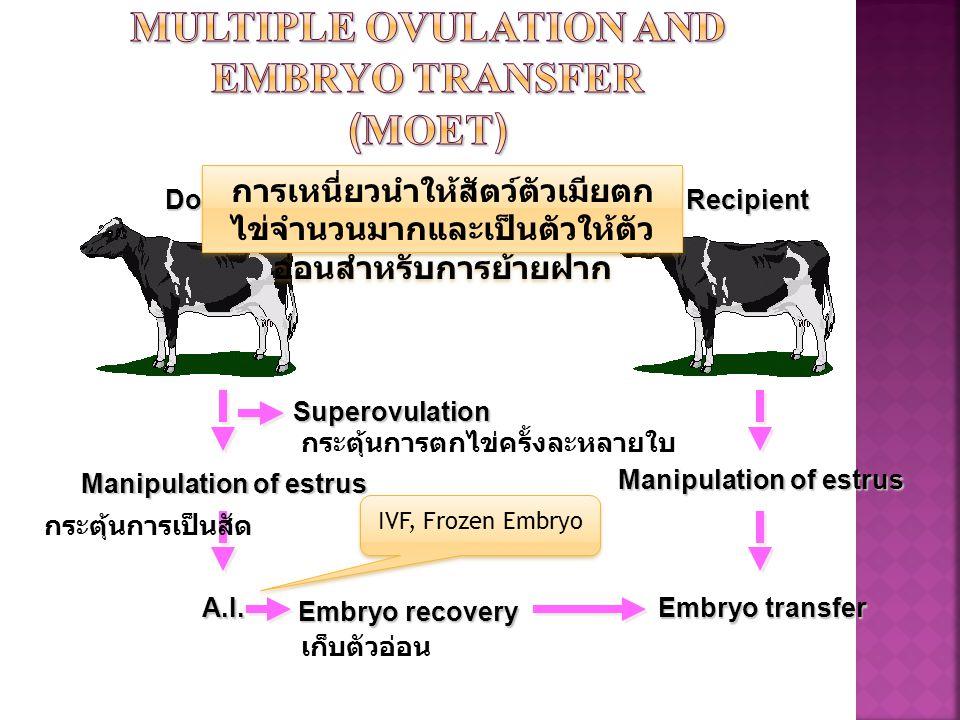 DonorRecipient Manipulation of estrus Embryo transfer การเหนี่ยวนำให้สัตว์ตัวเมียตก ไข่จำนวนมากและเป็นตัวให้ตัว อ่อนสำหรับการย้ายฝาก Superovulation Ma