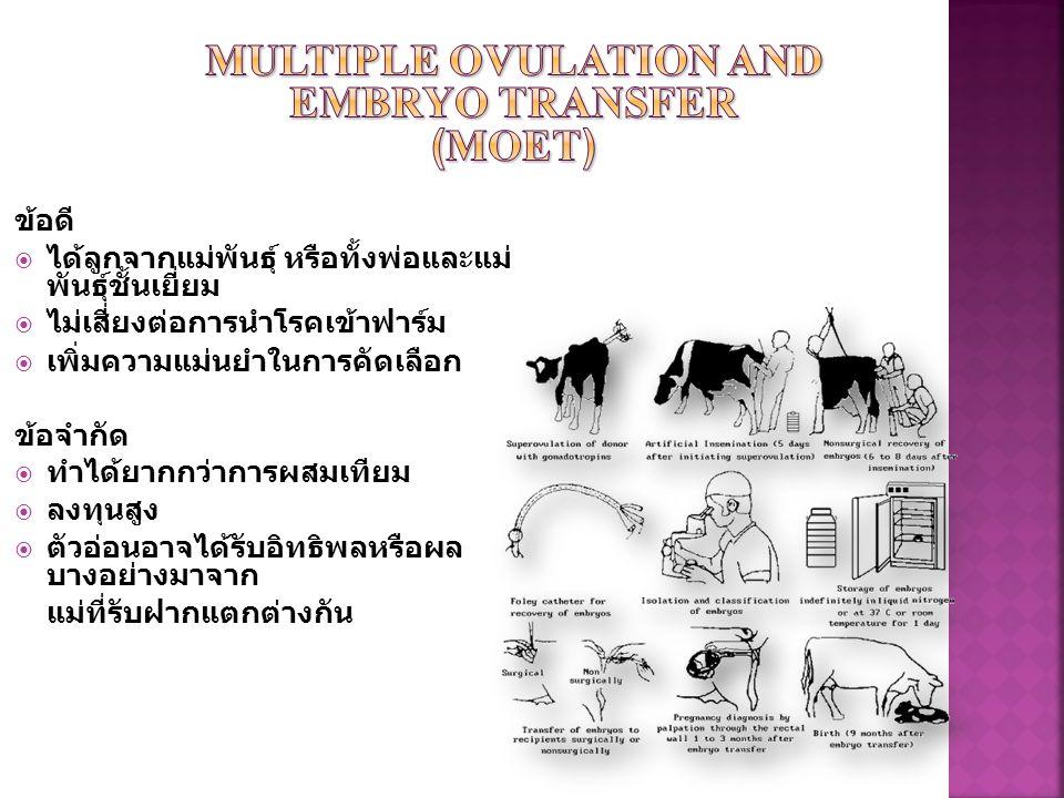  คือ การปฏิสนธินอกร่างกาย โดยทำการเก็บน้ำเชื้อ และไข่ จากสัตว์พ่อแม่พันธุ์ชั้นดี จากนั้นนำมาเลี้ยงใน ห้องปฏิบัติการ  ทำการจัดสภาพให้คล้ายกับ สภาพภายในตัวสัตว์มากที่สุด Semen collectionEgg collection Sperm egg Zygote IVM & IVF Embryo Transfer