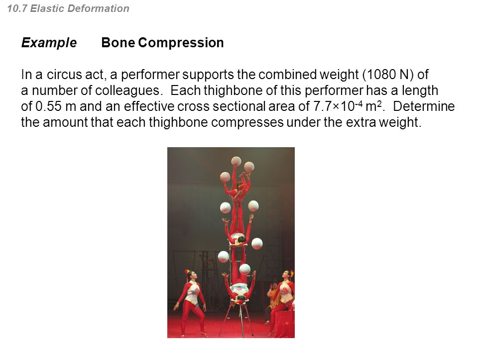 10.7 Elastic Deformation Example Bone Compression In a circus act, a performer supports the combined weight (1080 N) of a number of colleagues.