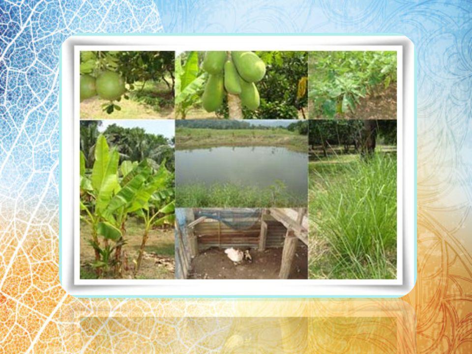ขั้นที่ 3 ทฤษฎีใหม่ขั้น ก้าวหน้า กลุ่มเกษตรกรที่ได้ดำเนินการตาม ทฤษฎีใหม่ในขั้นกลาง จนประสบ ความสำเร็จเบื้องต้น อาจก้าวเข้าสู่ขั้น ก้าวหน้า โดยการประส