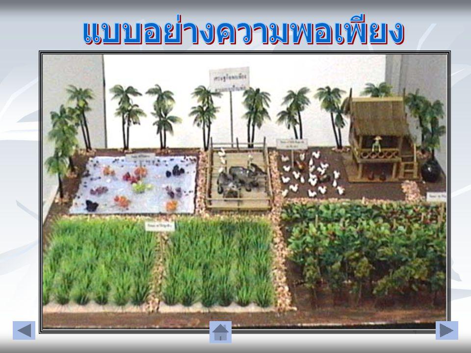 หัวใจของเศรษฐกิจพอเพียง เป็น ค่านิยมของคนไทยและเป็นวิธีการ ดำเนินชีวิตของคนไทย ว่าเดิมเคย เป็นอย่างไร จากเดิมที่เคยมีวิธีการ ดำเนินชีวิตแบบนี้ แล้ว ลองนำ แนวทางของปรัชญาเศรษฐกิจ พอเพียงไปใช้ดู น่าจะทำให้ สังคมไทย มั่นคง และยั่งยืนมากขึ้น