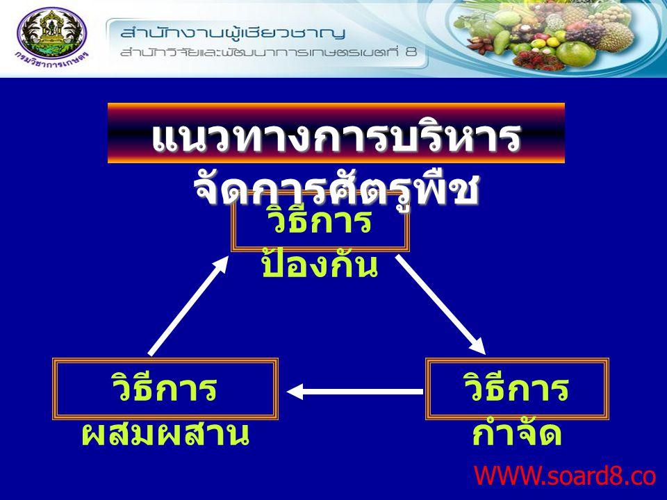 วิธีการ ป้องกัน WWW.soard8.co m วิธีการ กำจัด แนวทางการบริหาร จัดการศัตรูพืช วิธีการ ผสมผสาน