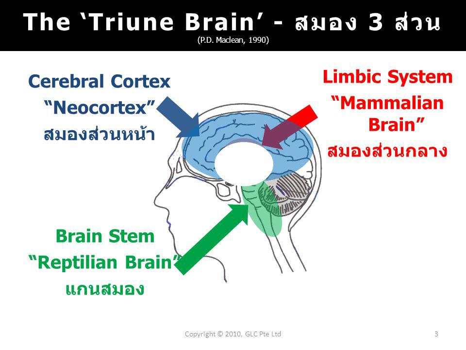 Cerebral Cortex Neocortex สมองส่วนหน้า 3Copyright © 2010, GLC Pte Ltd Brain Stem Reptilian Brain แกนสมอง Limbic System Mammalian Brain สมองส่วนกลาง The 'Triune Brain' - สมอง 3 ส่วน (P.D.
