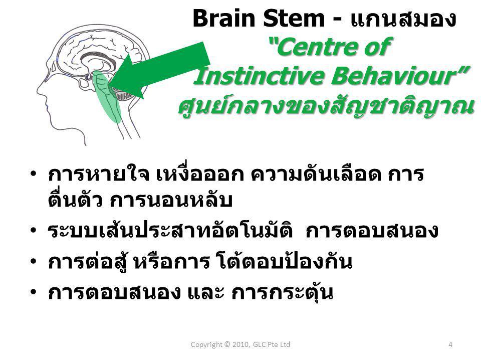 4Copyright © 2010, GLC Pte Ltd Brain Stem - แกนสมอง Centre of Instinctive Behaviour Instinctive Behaviour ศูนย์กลางของสัญชาติญาณ การหายใจ เหงื่อออก ความดันเลือด การ ตื่นตัว การนอนหลับ ระบบเส้นประสาทอัตโนมัติ การตอบสนอง การต่อสู้ หรือการ โต้ตอบป้องกัน การตอบสนอง และ การกระตุ้น