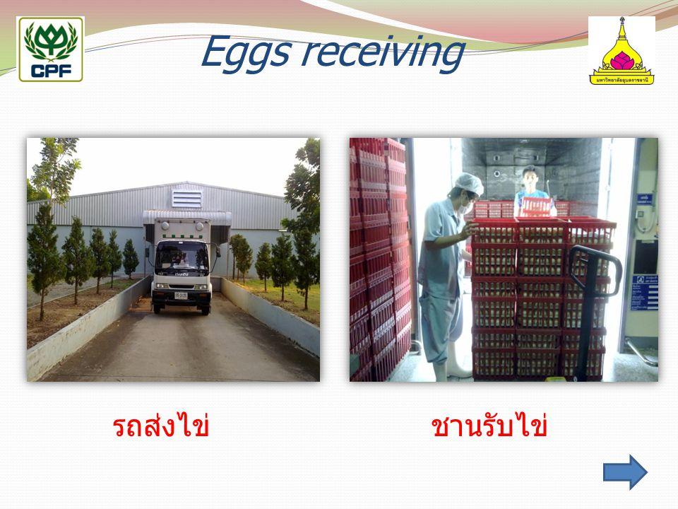 Eggs receiving รถส่งไข่ชานรับไข่
