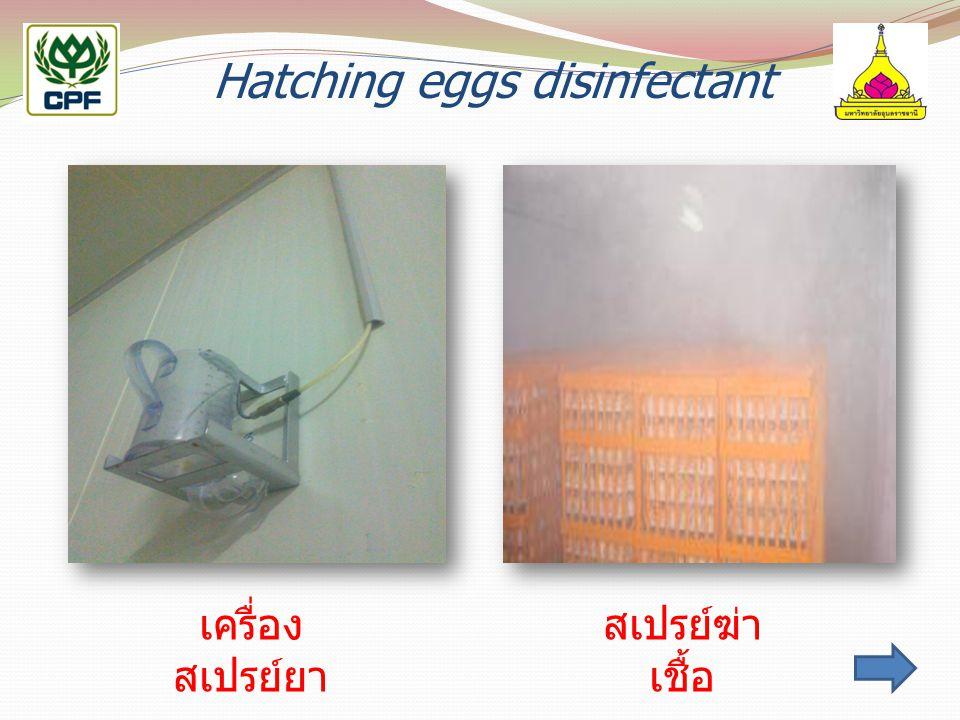 Hatching eggs disinfectant เครื่อง สเปรย์ยา สเปรย์ฆ่า เชื้อ